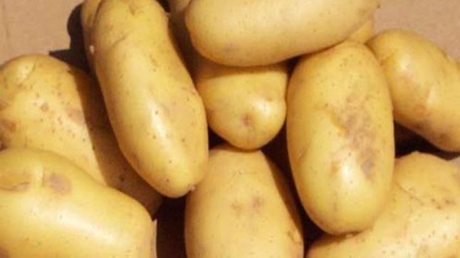 كيفية استخدام البطاطس في المزرعة واستبدالها بأدوات باهظة الثمن