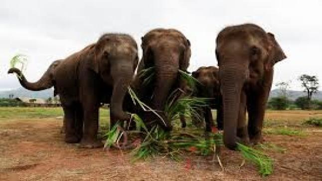 نفوق 6 أفيال بعد سقوطها في شلال مياه في تايلاند