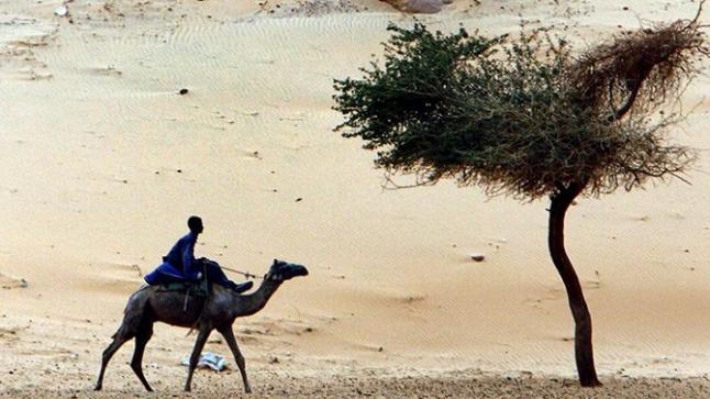 مصر تتحرك لتهدئة ذعر الفطريات السوداء بعد اكتشاف حالتين