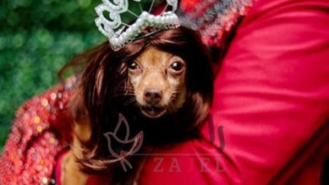 عرض أزياء للحيوانات الأليفة فى الفلبين
