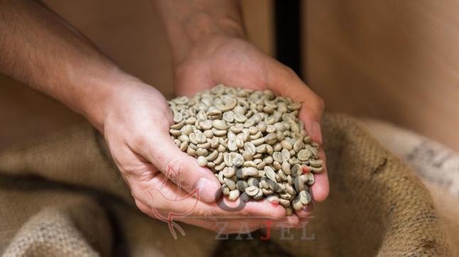 القهوة الخضراء سلاح فعّال لإنقاص الوزن